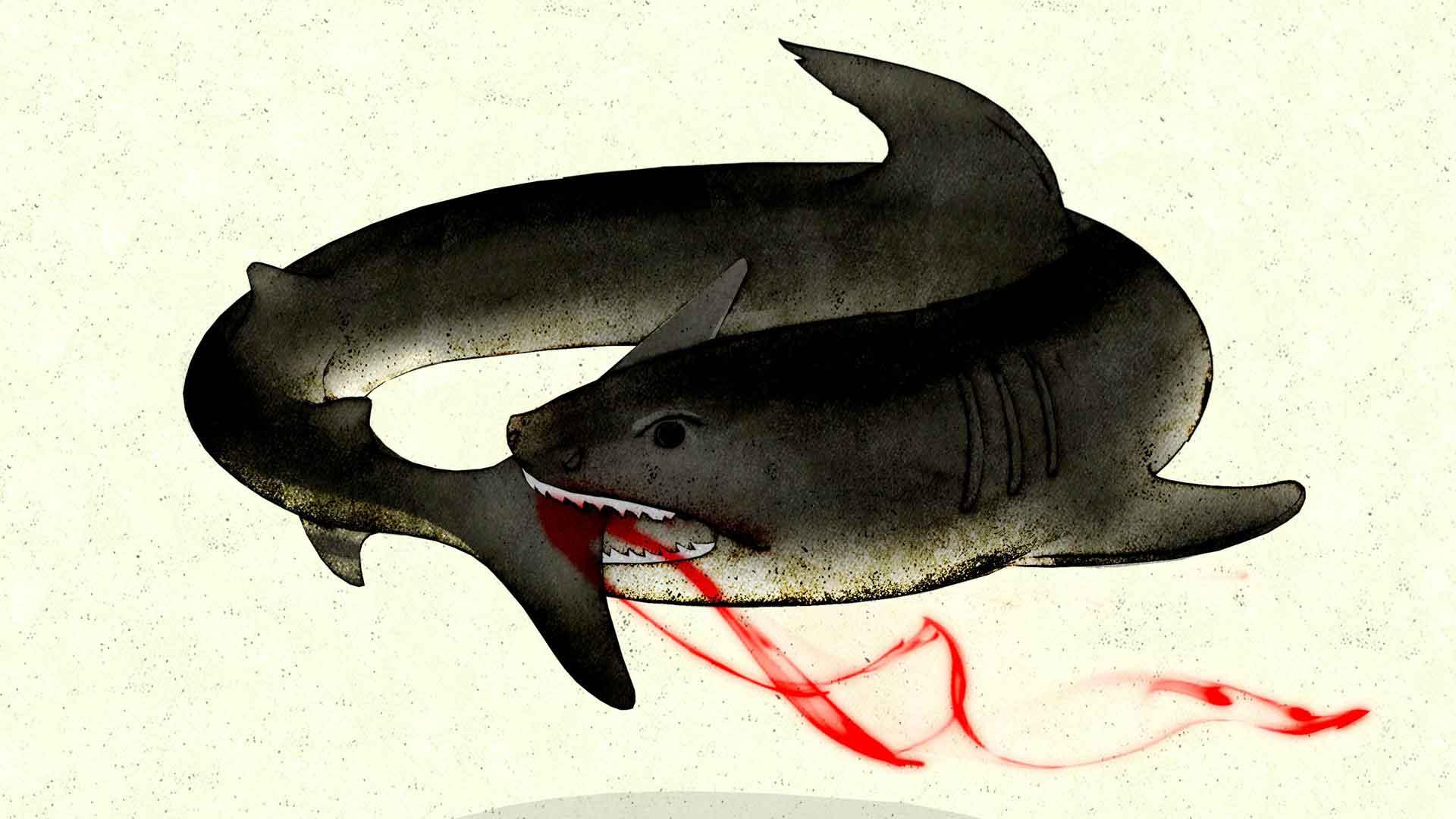 Brian Stauffer home slide – Shark
